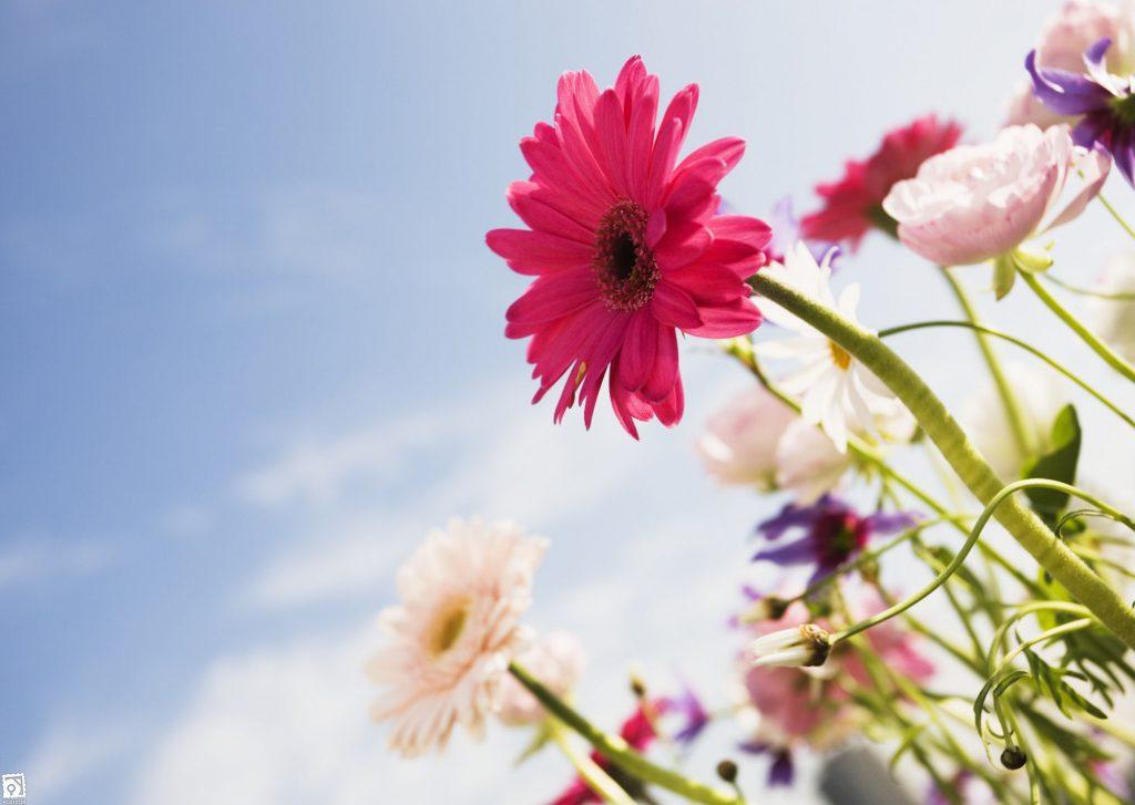 قیمت انواع گل در بازار امروز چند خرید گل از بازار گل محلاتی ...