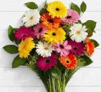 فروش عمده گل شاخه بریده ژربرا با بهترین قیمت