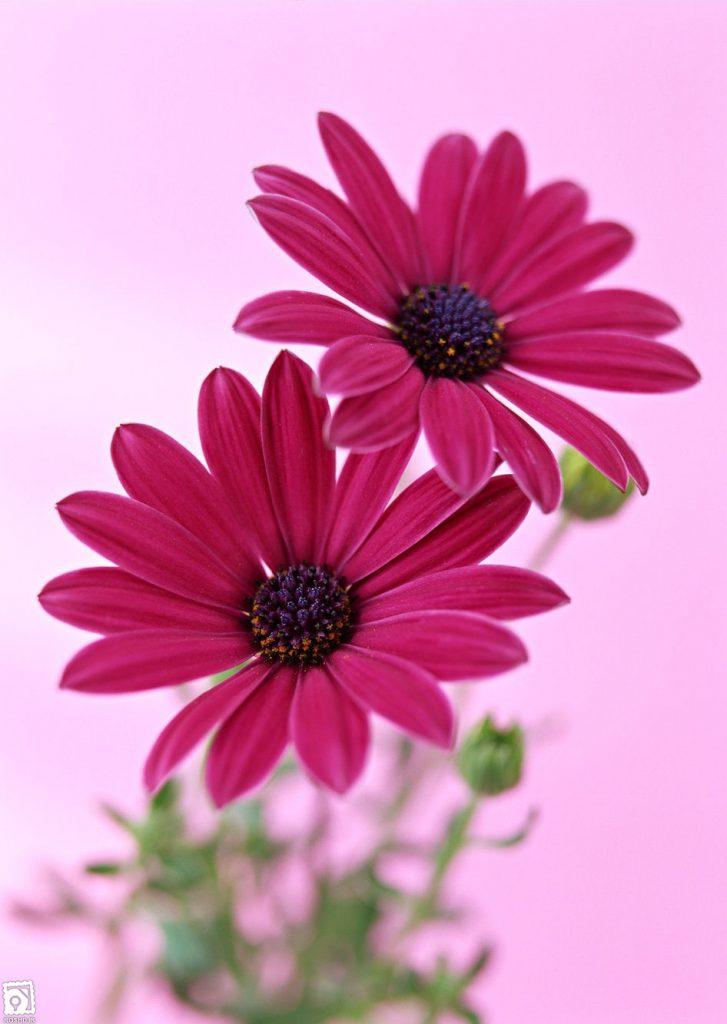 قیمت آنلاين انواع گل در بازار امروز سال1399