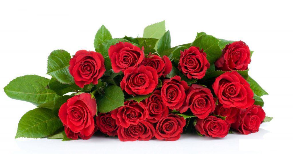خرید گل رز عمده ارزان قیمت|بازار گل محلات
