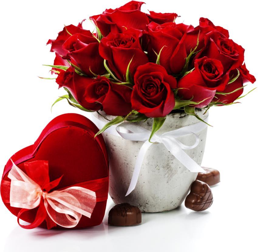 فروش عمده گل رز در دسته های 50 شاخه ای