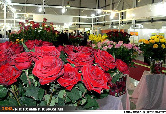 قیمت هر شاخه گل رز قرمز عمده