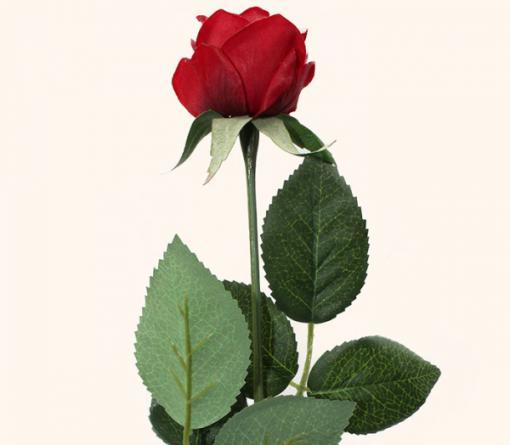 دسته گل رز هلندي