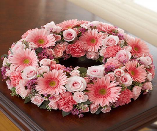 گل ارزان ژربرا