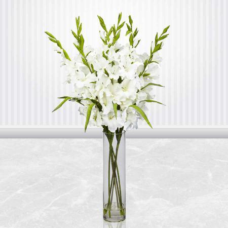 لیست قیمت هر شاخه گل گلایول