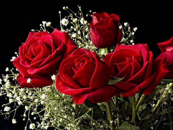 قیمت هر شاخه گل رز