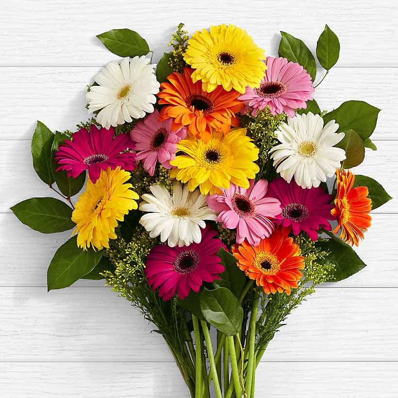 سفارش گل عمده ژربرا در بازار امروز