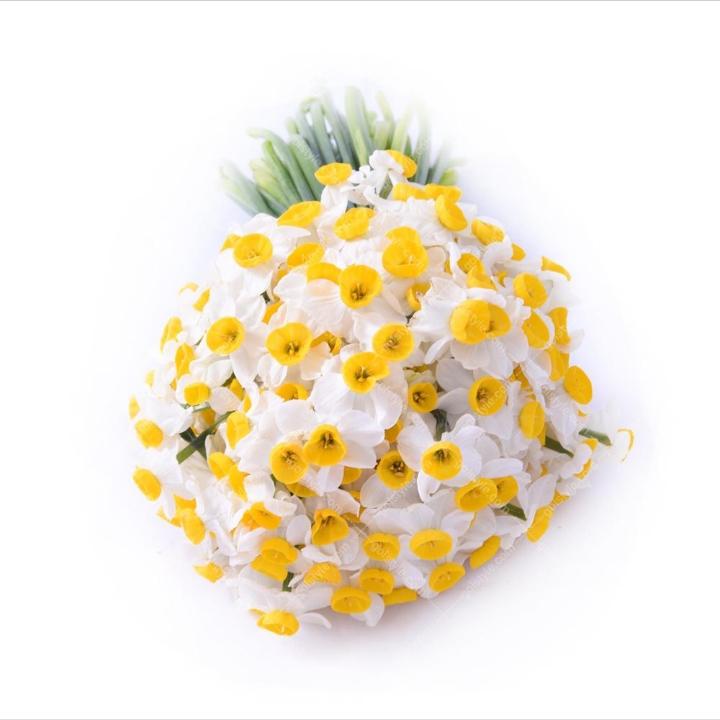 فروش گل نرگس