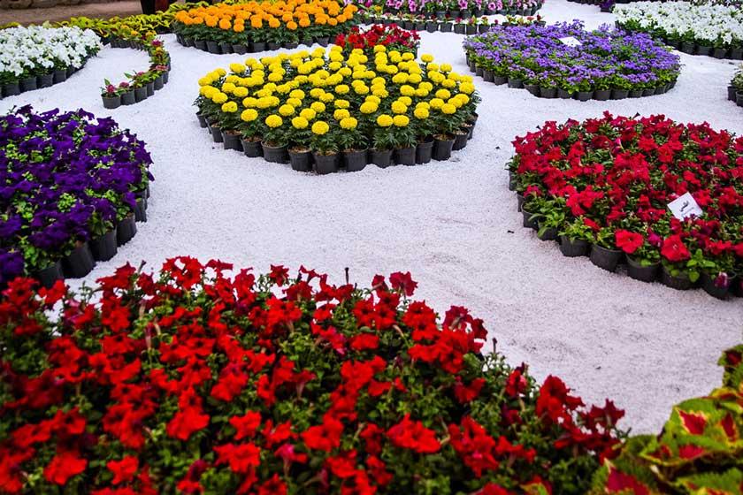 خريد و فروش عمده گل