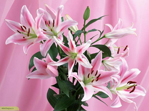 خرید و فروش اینترنتی انواع گل شاخه بریده لیلیوم