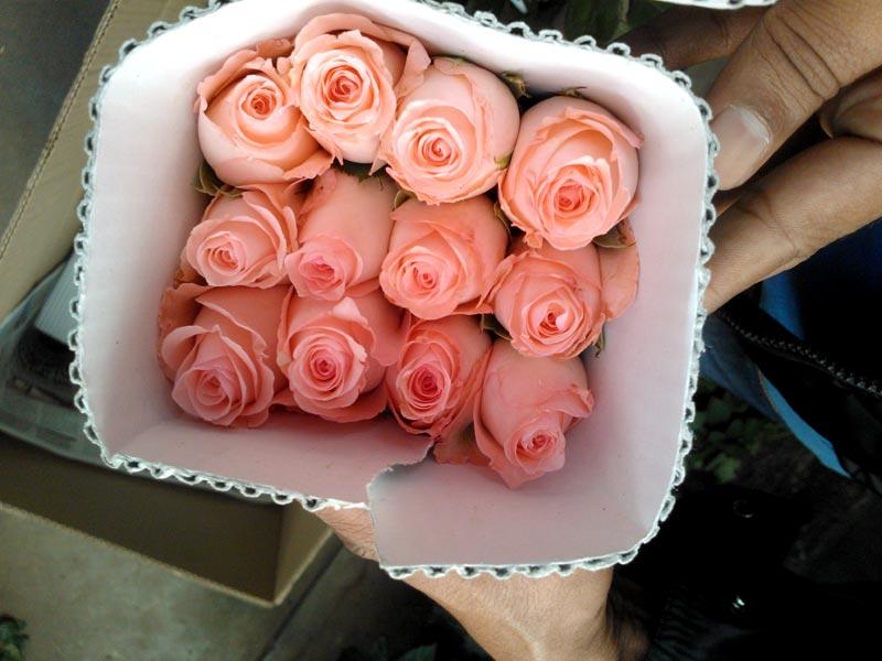 پخش عمده گل رز