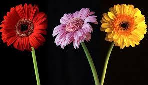 قیمت انواع گل در بازار امروز چند؟ خرید گل از بازار گل محلاتی ...