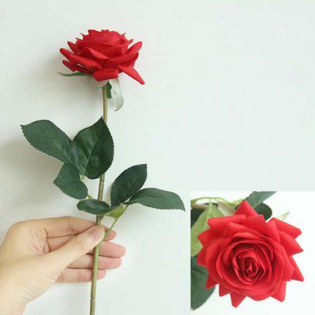 قیمت شاخه گل رز ایرانی