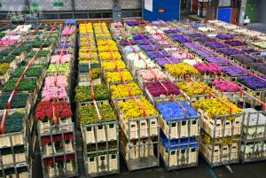 گل فروشی آنلاین شاخه بریده
