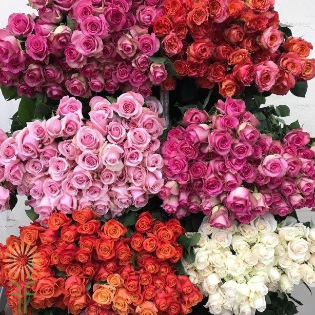 فروش عمده گل رز شاخه بریده